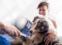 Ultra-sons pour la rééducation du chien