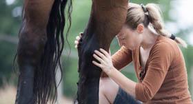 Ostéopathie pour le cheval