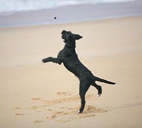 Un chien équilibré