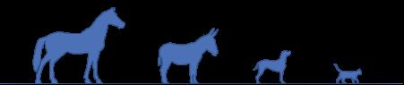 Ostéopathie pour chiens et chevaux